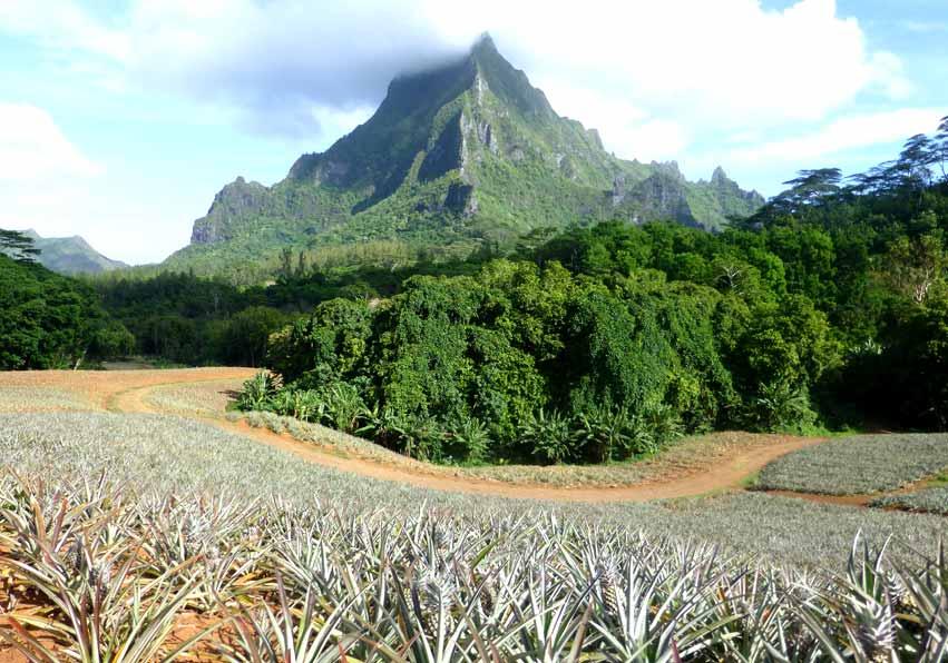 Au pied du mont Rotui à Moorea, le site agricole de la vallée d'Opunohu