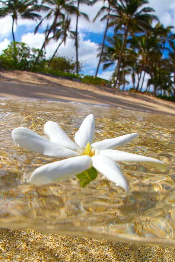 Bain de Tiare Tahiti © Patrick Vieira