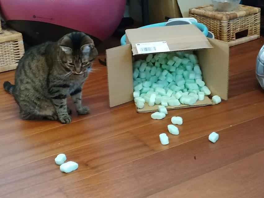 Photo reçue sur Facebook de Cyrielle qui nous expliquait que son chat adorait les colis plein de bulles vertes (recyclées et biodégradables) de La Boutique du Monoï