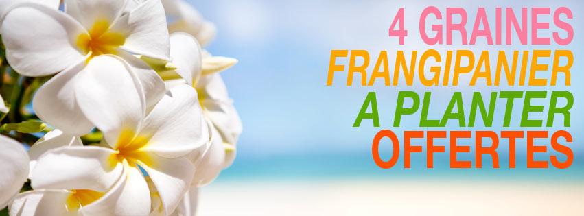 DES GRAINES DE FRANGIPANIER OFFERTES !