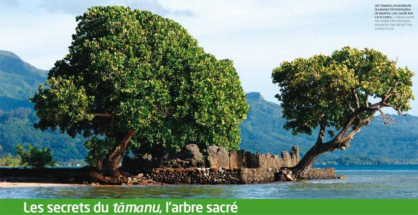 Ati, Arbres sacrés de Tamanu Tahiti sur le marae Taputapuatea à Raiatea © Air Tahiti Magazine - Photos : Philippe Bacchet.