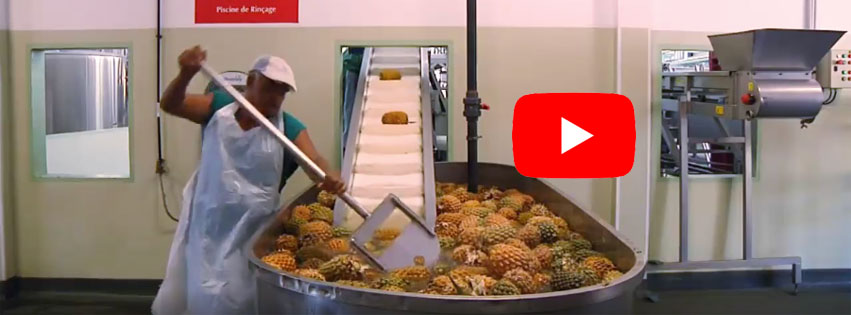 L'ananas Queen cultivé à Moorea est le best-seller de l'Usine de Jus de Fruits.