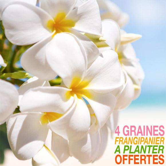 La Boutique du Monoï vous offre, avec votre commande, un sachet de 4 graines à planter du célèbre Frangipanier, le Tipanie Tahiti