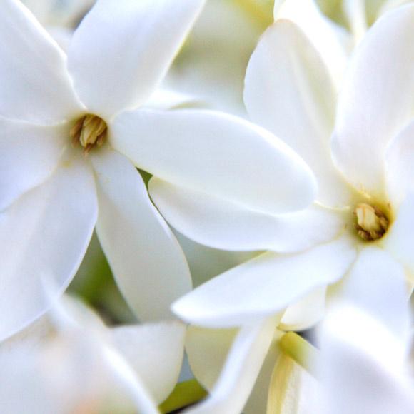 Photo des Fleurs de Tiare Tahiti avec l'aimable autorisation de Maeva Destombes.