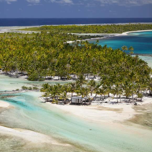 Cocoteraie sur l'atoll de Tikehau Archipel des Tuamotu d'où est extrait l'huile de coco © Ben Thouard