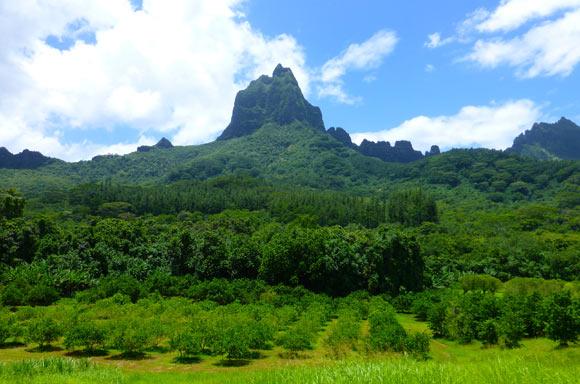 Magnifiques ballades à faire dans l'exploitation du Lycée Agricole, installée sur le site exceptionnel d'Opunohu, enveloppé dans les bras des majestueuses montagnes de Moorea.