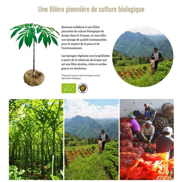 EPONGE VÉGÉTALE FACONNÉE A PARTIR DE FARINE DE KONJAC ISSUE DE L'AGRICULTURE BIOLOGIQUE