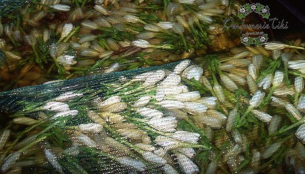 Les sacs de Tiaré Tahiti, prêts à plonger dans l'huile de coco raffinée pour l'étape dite de l'enfleurage