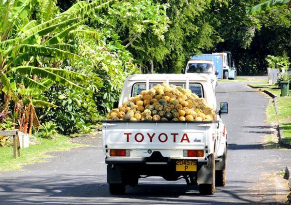 Le célèbre ballet de camionnettes chargées de fruits frais n'est pas une image rare sur la route de l'île de Moorea...