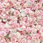 Rose-Taina